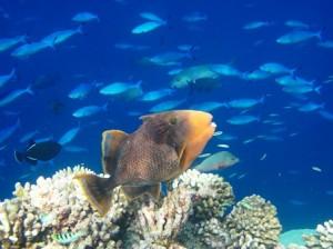 Malediven Schnorcheln Madoogali Hausriff